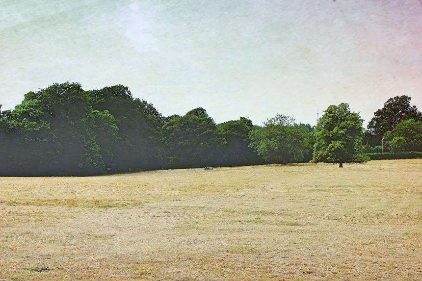 IMG_1230_Fotor tree