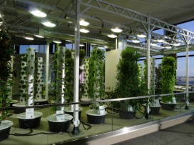 chicago-ohare-airport-indoor-vertical-garden-1-e1370281742913